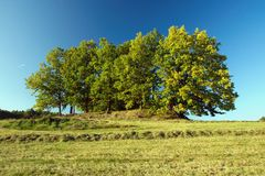 Drzewa na wzgórzu Zdjęcia Stock