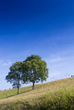 Drzewa na wzgórzu Obraz Royalty Free