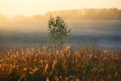 Drzewa na zmierzchu Fotografia Stock