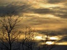 Drzewa na zmierzchu tle Obraz Royalty Free