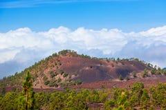 Drzewa nad chmurami przy wulkanem Teide w Tenerife wyspie - kanarek obrazy royalty free