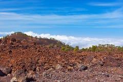Drzewa nad chmurami przy wulkanem Teide w Tenerife wyspie - kanarek obraz stock