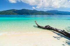 Drzewa nad piaskowatą plażą Zdjęcie Stock