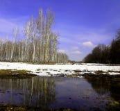 Drzewa nad wiosny rzeką Zdjęcia Royalty Free