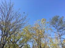 Drzewa, niebieskie niebo Zdjęcie Royalty Free