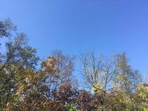 Drzewa, niebieskie niebo Obraz Royalty Free
