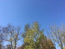 Drzewa, niebieskie niebo Zdjęcie Stock