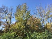 Drzewa, niebieskie niebo Obrazy Stock