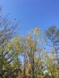 Drzewa, niebieskie niebo, wczesna jesień Obrazy Royalty Free