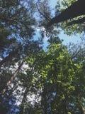 Drzewa & niebo Obraz Royalty Free