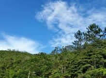 Drzewa & niebo Zdjęcia Royalty Free