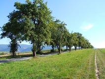 Drzewa obok each inny Obrazy Stock