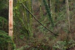Drzewa oczy Zdjęcie Royalty Free
