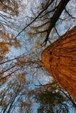 Drzewa od puszka below Zdjęcie Royalty Free