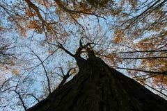 Drzewa od puszka below Obrazy Royalty Free