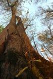Drzewa od puszka below Obraz Stock