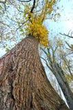 Drzewa od puszka below Zdjęcie Stock