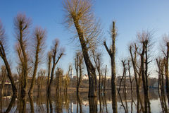 Drzewa odbicie na wodzie. Zdjęcie Royalty Free