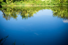 Drzewa odbicie w rzece Fotografia Stock