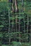Drzewa odbicie w zielonym stawie Fotografia Royalty Free