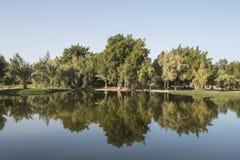 Drzewa odbija w stawie przy wiejskim parkiem Obrazy Royalty Free
