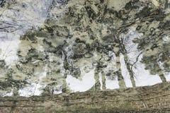 Drzewa odbija życie na waterstream obraz stock