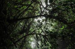 Drzewa odgórny widzieć spod spodu zdjęcie stock