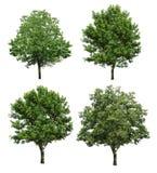 Drzewa odizolowywający na białym tle Obraz Stock