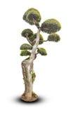 Drzewa odizolowywający na białym tle Zdjęcia Stock