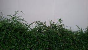 Drzewa ogrodzenie Fotografia Royalty Free