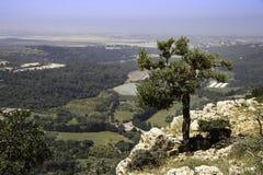 Drzewa oliwnego dorośnięcie na górze wzgórza Obraz Royalty Free
