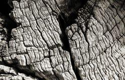 Drzewa oliwnego drewna tekstura Fotografia Royalty Free