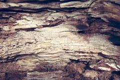 Drzewa oliwnego drewna tekstura Obrazy Royalty Free