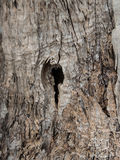 Drzewa oliwnego korowaty tło zdjęcie royalty free
