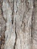 Drzewa oliwnego korowaty tło obrazy stock