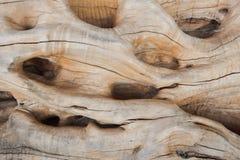 Drzewa oliwnego tła tekstura Obrazy Royalty Free