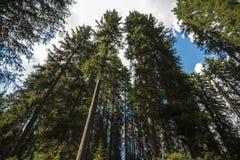 Drzewa ono wpatruje się przy niebem Zdjęcia Royalty Free