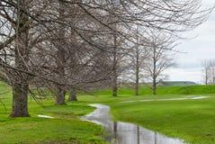 drzewa paśnika bieg strumienia drzewa Zdjęcie Royalty Free