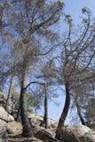 Drzewa palący w ogieniu Obrazy Stock