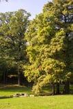 drzewa park Obraz Stock