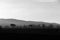 Drzewa po środku mgły przy zmierzchem, z niektóre wzgórzami w półdupkach Obraz Stock