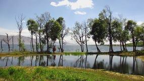Drzewa po środku ErHai Zdjęcie Royalty Free