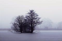 Drzewa po środku jeziora Obrazy Stock