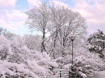 Drzewa pod śniegiem w miasto parku fotografia royalty free