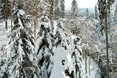 Drzewa pod gęstą śnieżną koc Obraz Stock