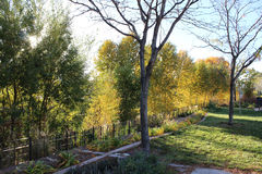 Drzewa Pod ogrodzeniem Obrazy Royalty Free