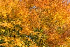 Drzewa podczas jaskrawego Fotografia Stock