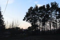 Drzewa podczas zmierzchu Obrazy Stock