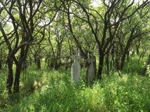 Drzewa podnoszący w cmentarzu zdjęcie royalty free