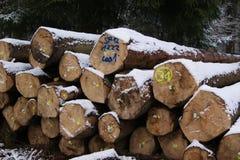 drzewa powalać wypiętrzający wintertime Fotografia Royalty Free